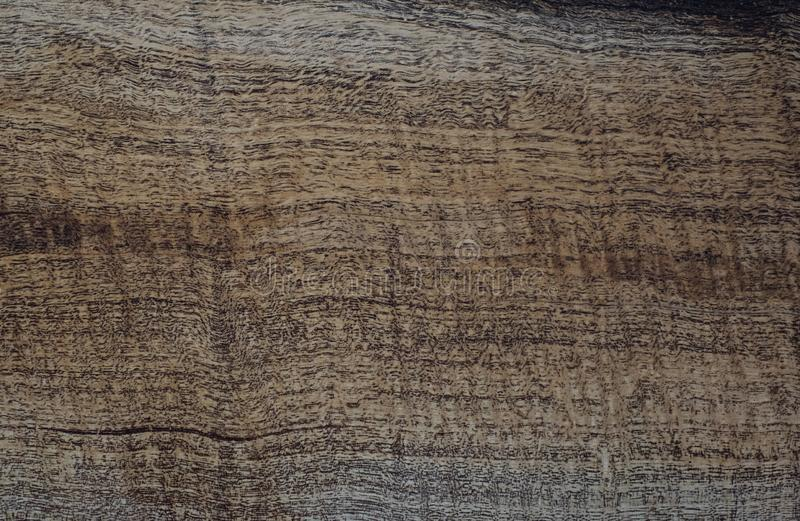 Wood has tiger stripe or curly stripe grain, Afzelia wood exotic beautiful pattern for crafts or abstract art Background royalty free stock photo