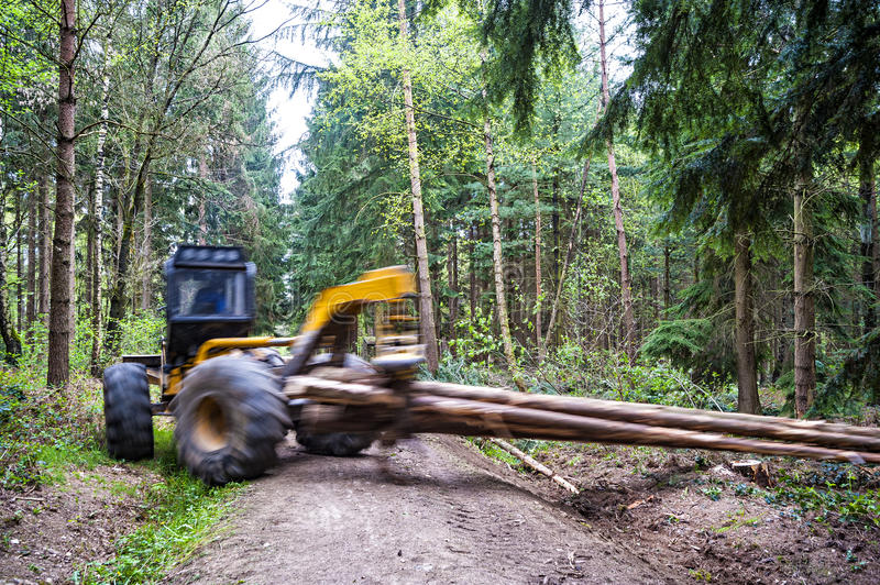 Wood hauling. Hauling wood in the forest by a grapple skidder, motion of hauling machine and hauled logs blurred royalty free stock image