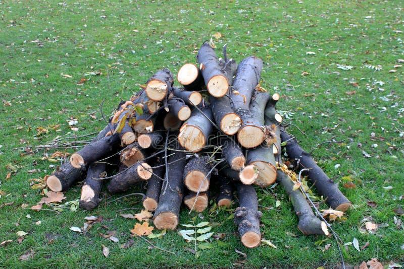Download Wood heap on grass stock photo. Image of hardwood, billet - 27777254