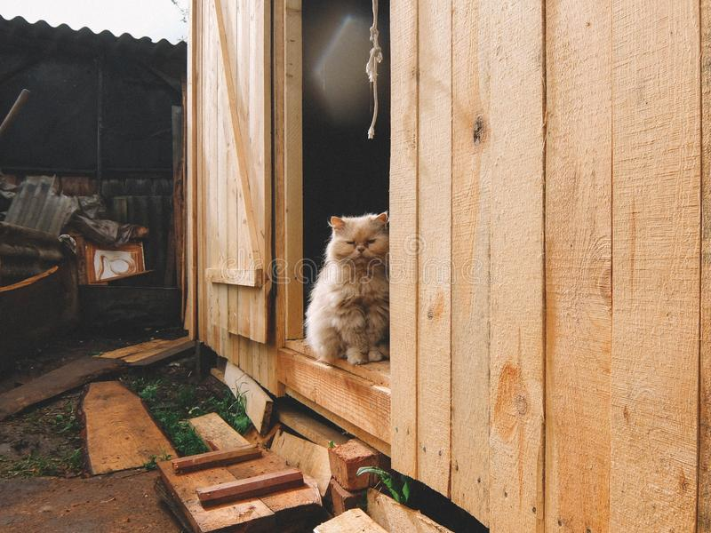 Wood, Home, Small To Medium Sized Cats, Window stock images