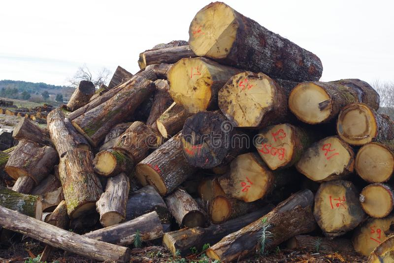 Wood industry. Large pieces of wood drying before processing. Environment impact background royalty free stock photography