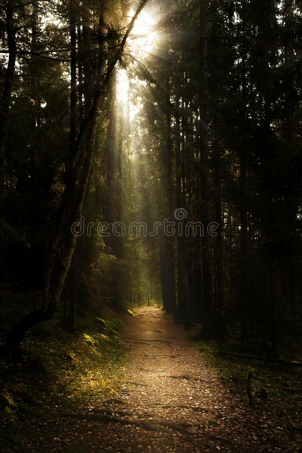 In the wood in Karlstad Sweden. Forrest in Karlstad Sweden and sunset with sunbeams Shines through stock images