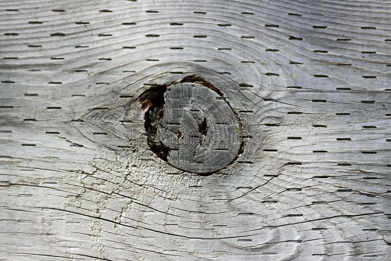 Wood Knot Hole