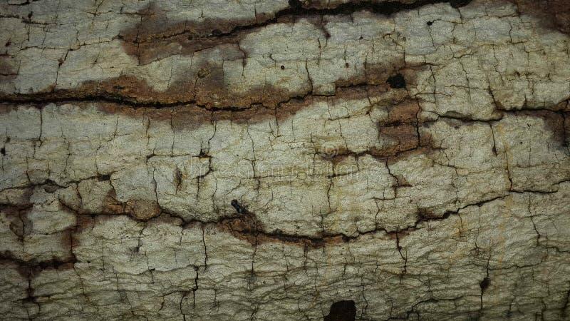 Wood kornmodeller för bakgrund arkivbild