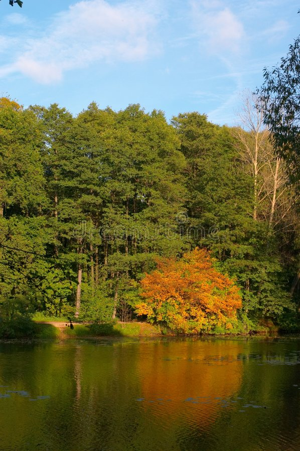 Wood lake in September stock photography