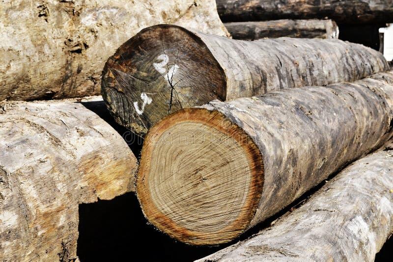 Wood log. Closeup of a pile of wood log stock image