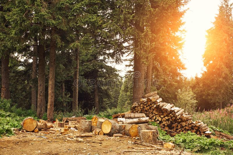 Wood logs in the forest stock photos