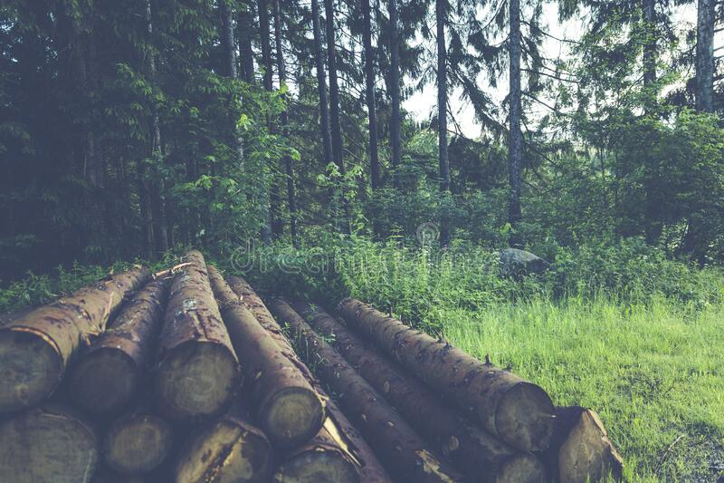 Wood Logs Near Trees Free Public Domain Cc0 Image