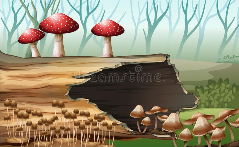 A wood with mushrooms royalty free illustration