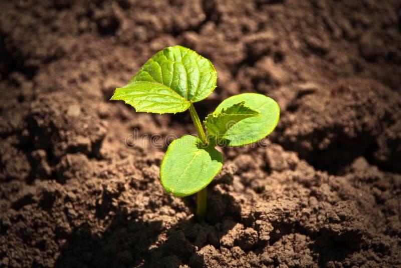 Eco green plant royalty free stock photo