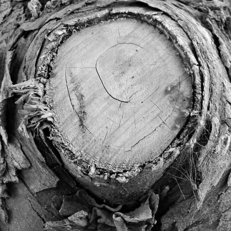 Wood Noir stock photos