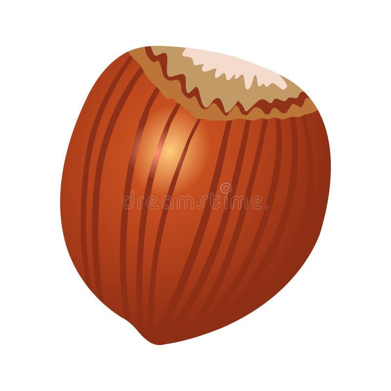 Wood nut vector illustration