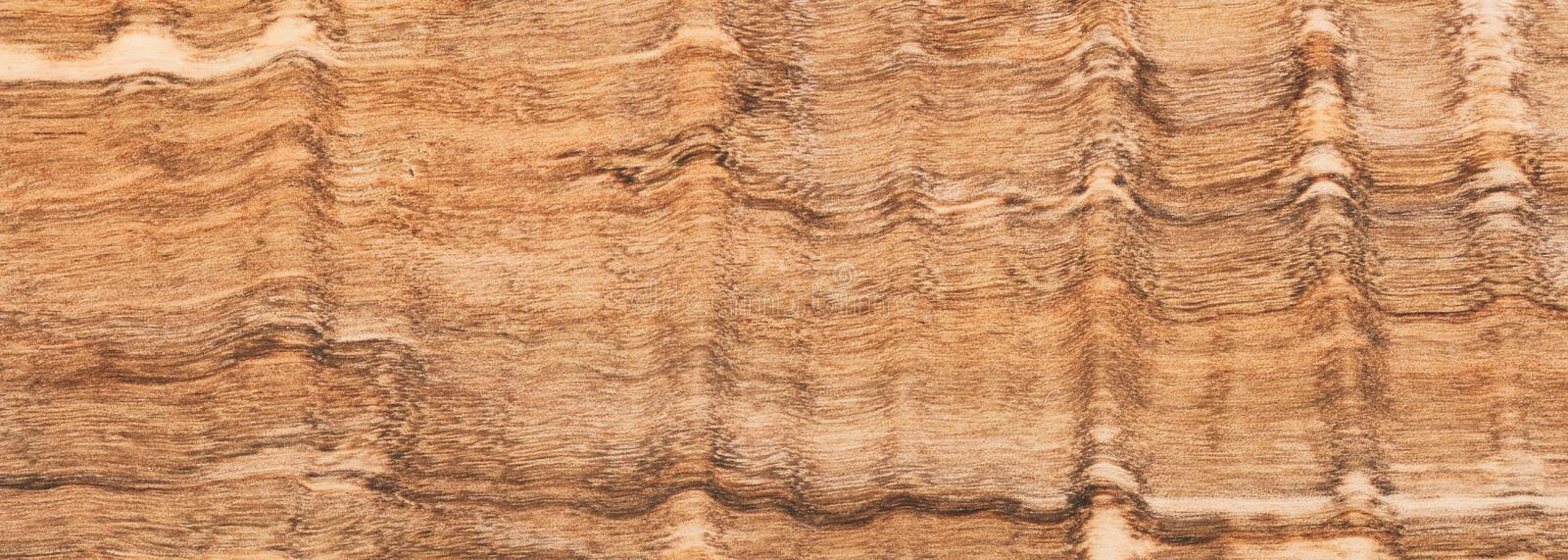 Wood olive tree plank, floor or wall, natural board background, banner royalty free stock image
