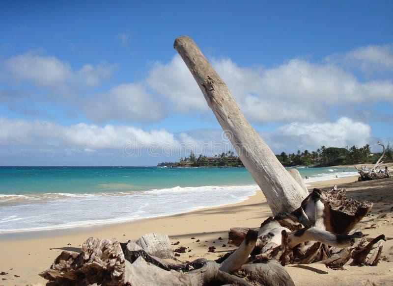 Wood at Paia beach royalty free stock image
