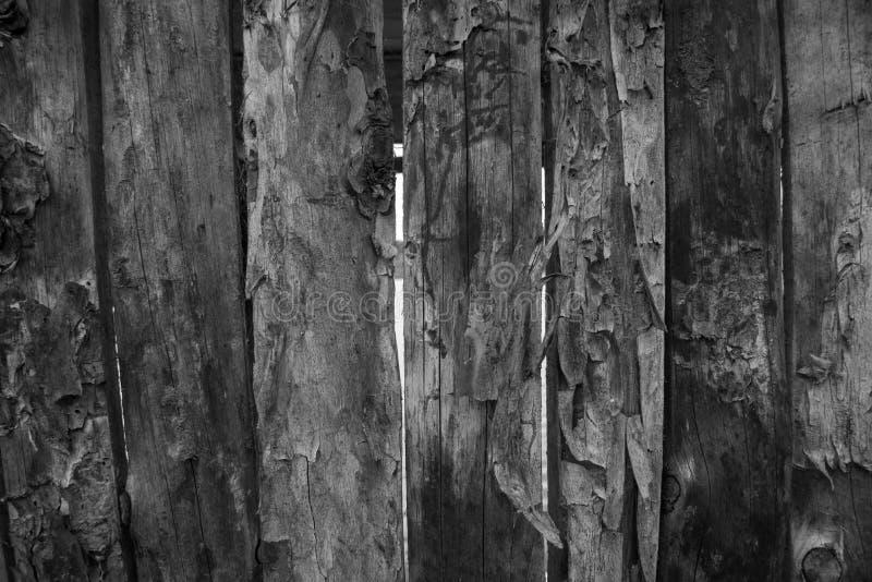 Wood panelbakgrund som är svartvit royaltyfria bilder