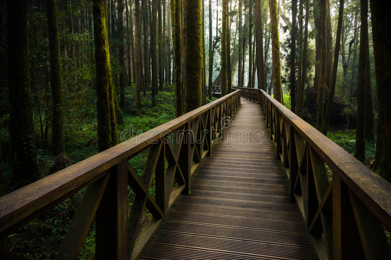 A wood path in Alishan National Scenic Area Cypress trail stock photo