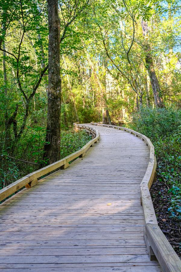 Wood Path Curving Through Green Forest royalty free stock images