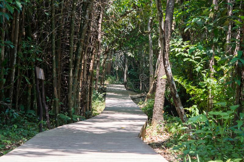 Wood pathways in the forest and trees. stock photo