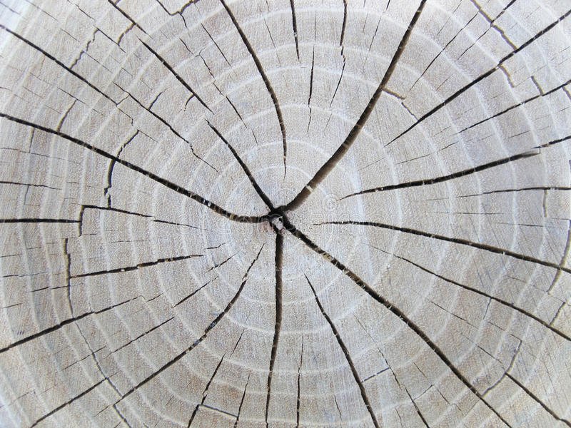 Wood pattern. The inside area royalty free stock photography