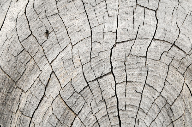 Wood Pattern Trunk Texture royalty free stock images