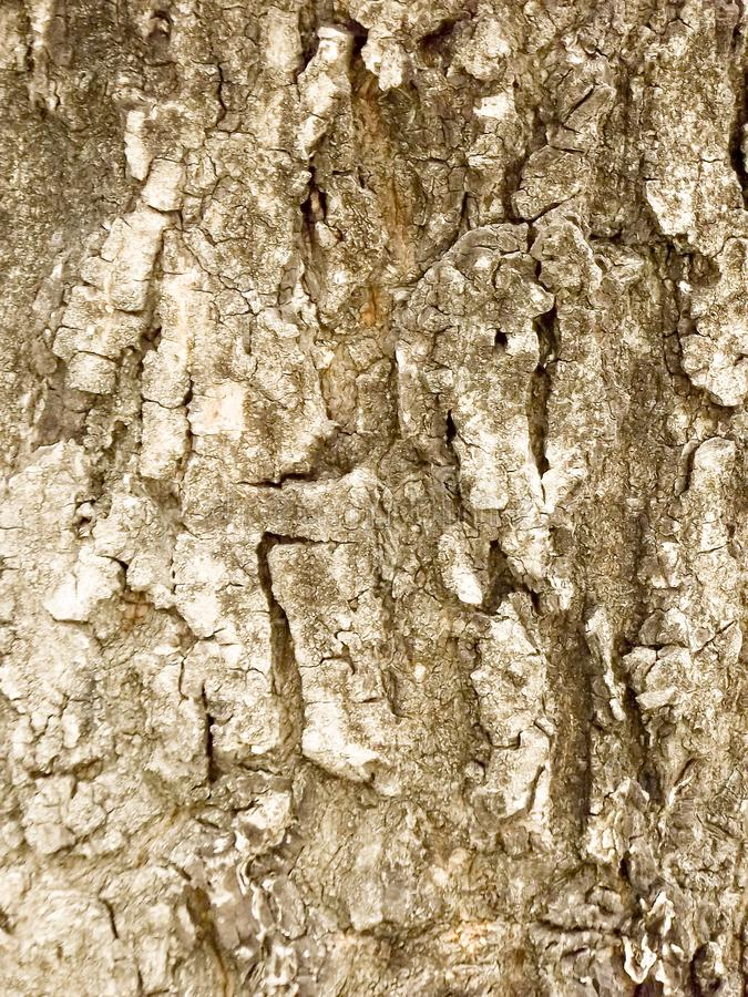 Wooden old bark tree grungy rough trunk texture stock photo