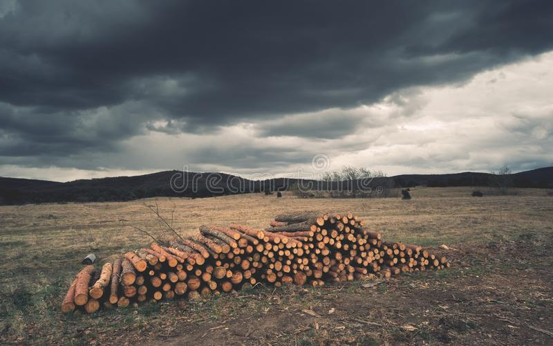 Wood pile on the edge of forest stock photography