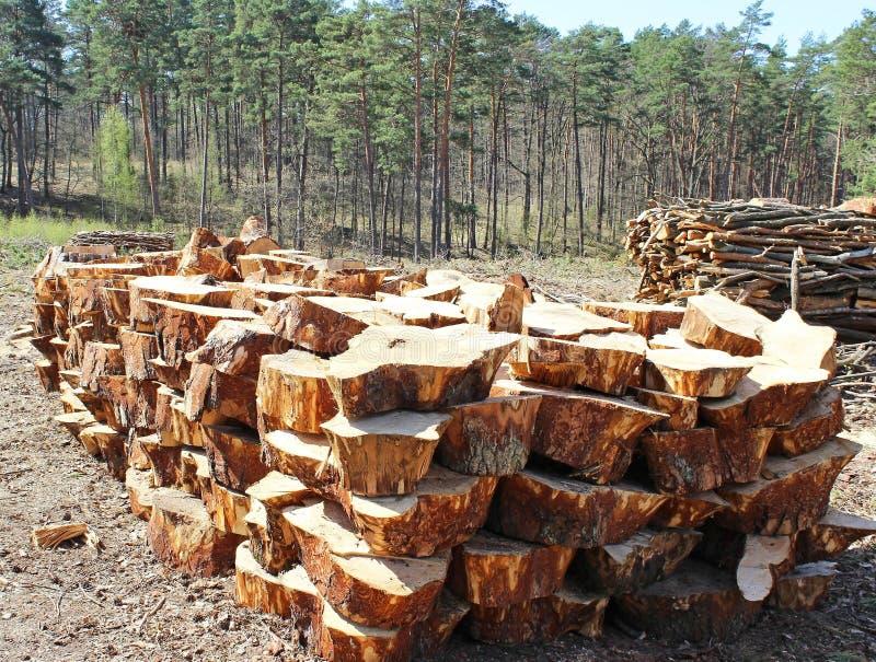 Download Wood pile stock photo. Image of pile, chopped, freshly - 30722034