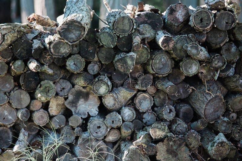 Wood Pile royalty free stock photo