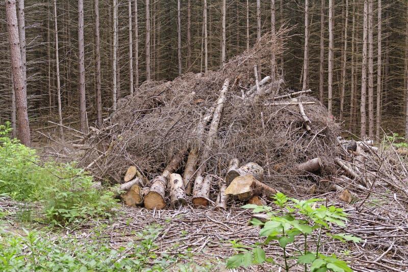 Wood Pile Ready to Burn royalty free stock image
