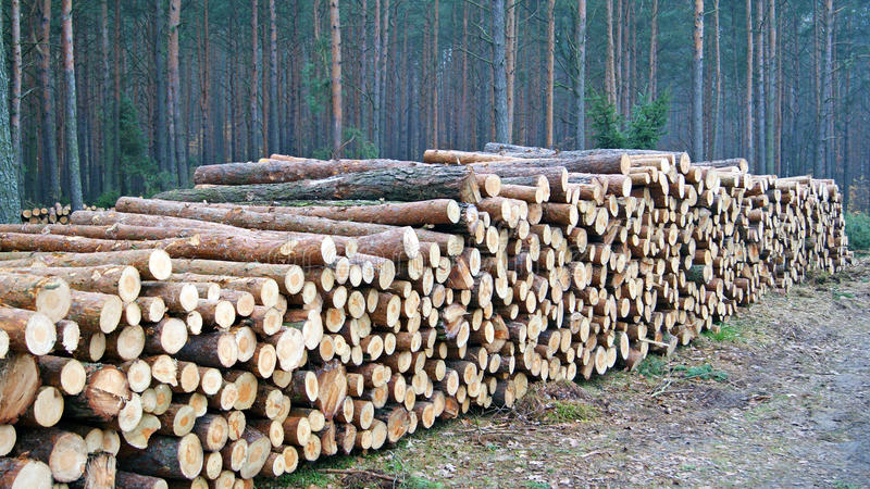 Download Wood piles stock image. Image of circle, background, firewood - 27723551