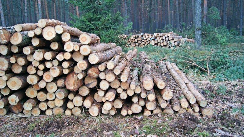 Download Wood piles stock photo. Image of circle, rings, ring - 27723836