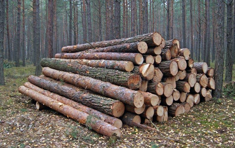 Wood Piles Stock Photo