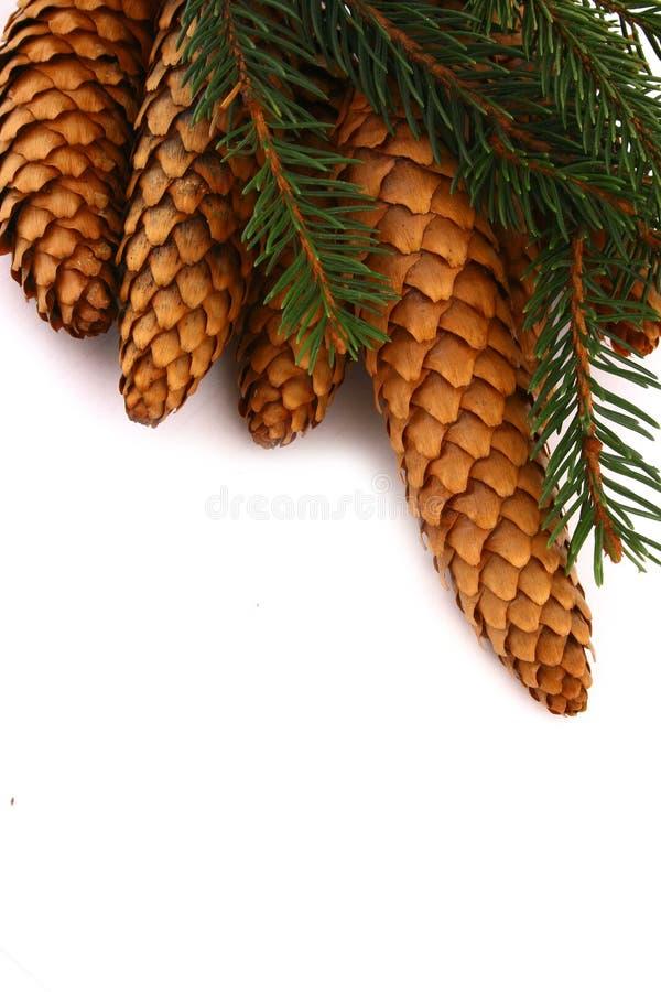 Wood pine fir cones stock photos