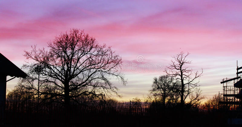 Wood pinl sunset stock images