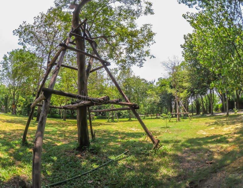 Wood pinnekryckor för träd, gör trädet starkt i en botanisk trädgård royaltyfria bilder