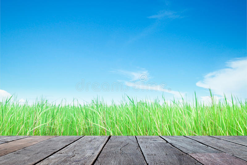 Wood planka med fältet och himmel för grönt gräs royaltyfri foto