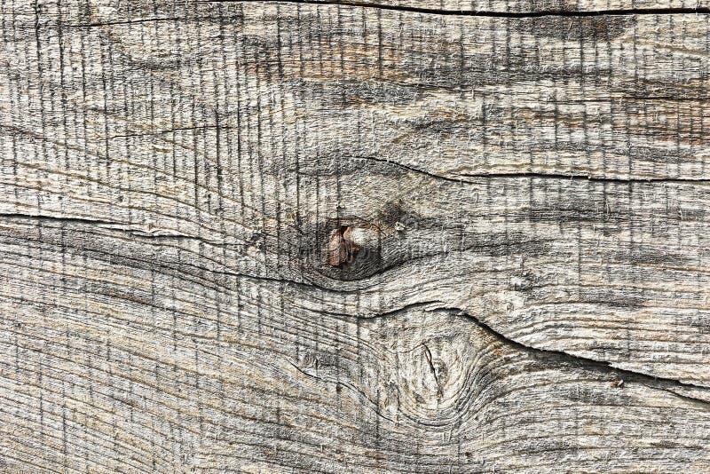 Wood plankayttersida för alm royaltyfri foto