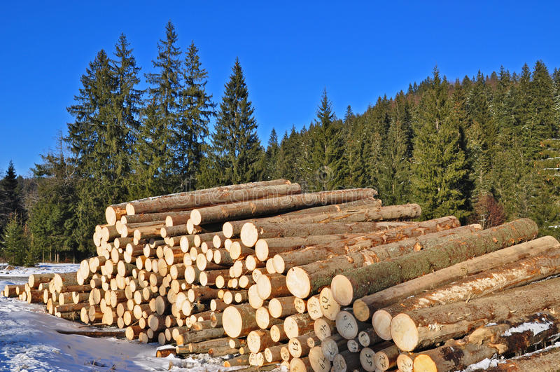 Download Wood preparation stock photo. Image of flora, felling - 18133116