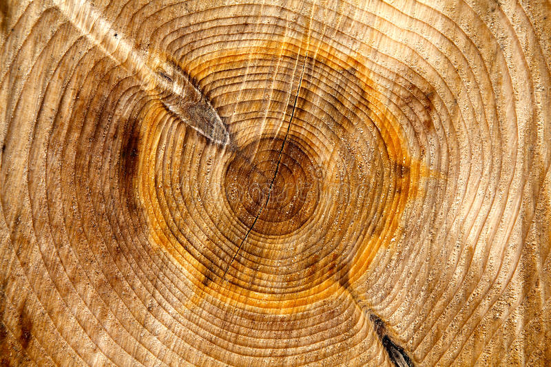 Download Wood Rings Background Texture Stock Photo - Image: 24775012