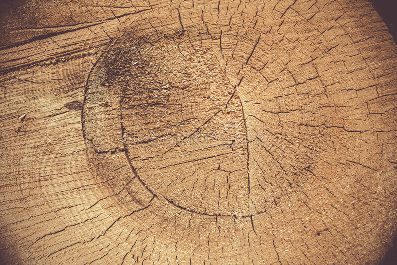 Wood rings. Wooden rings close up wallpaper stock photo