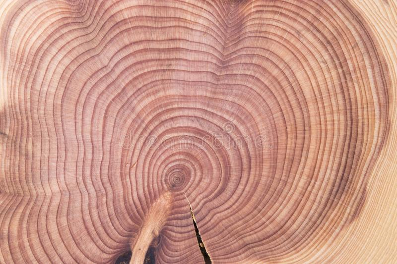 Wood round texture. Cracked juniper. royalty free stock photo