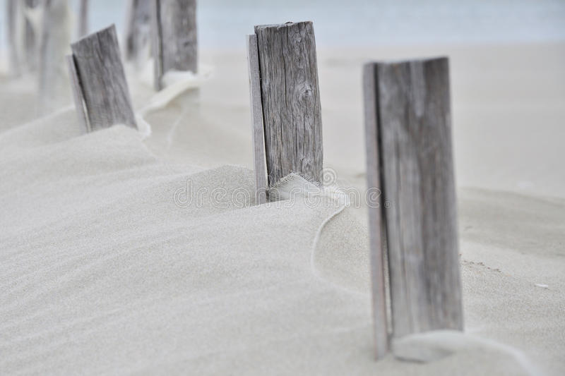 Wood in the sand stock images