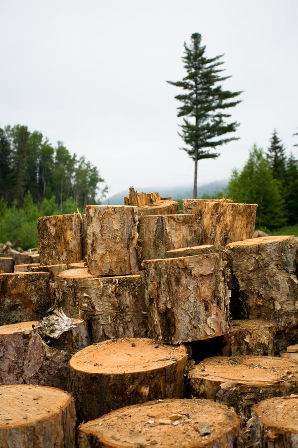 Wood sawn log stock image