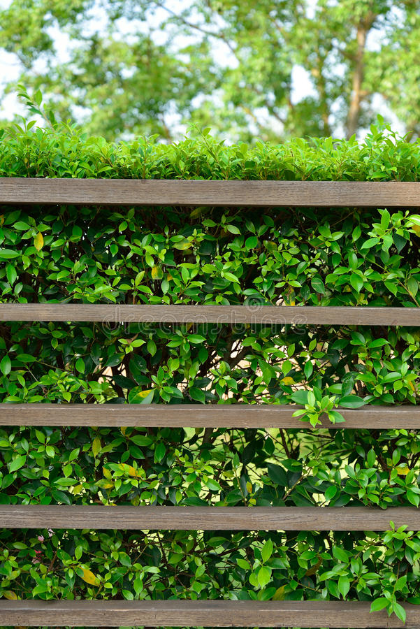 Wood Shelf With Green Leaves Stock Image