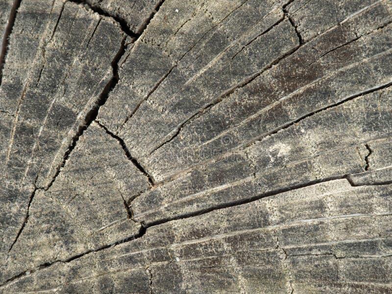 Wood skälltextur för mycket gammal silver arkivfoton