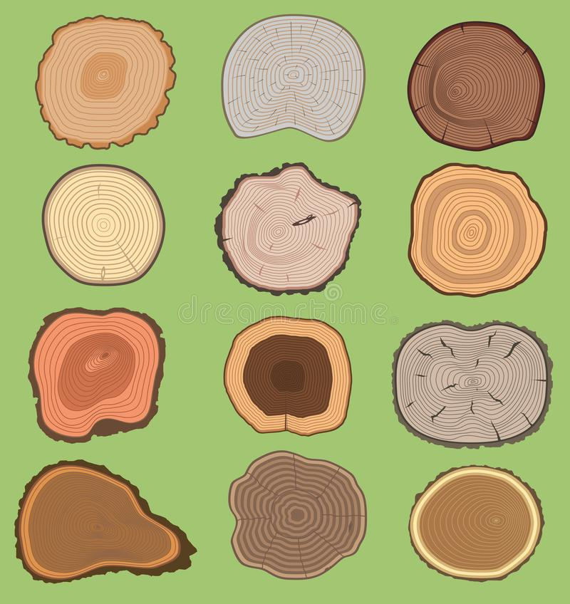 Wood slice texture wooden vector tree life age circle rings cut tree material. Set of tree slices wooden trunk natural vector illustration