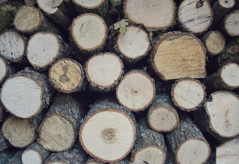 Wood slices royalty free stock image
