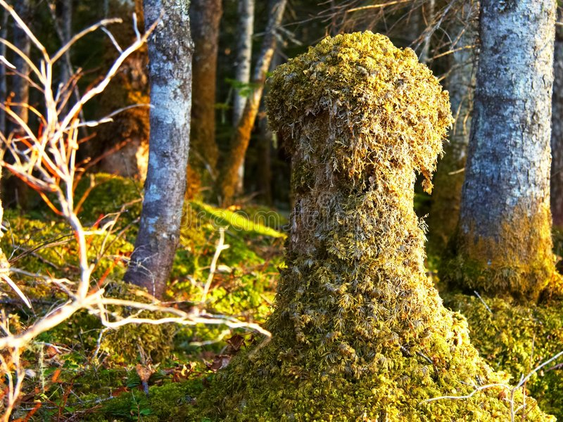 Wood spirit. Stub covered with lichen in the forest royalty free stock photos