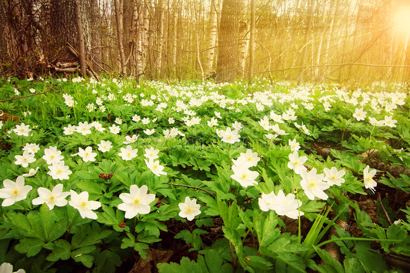 Wood with spring flowers stock photography
