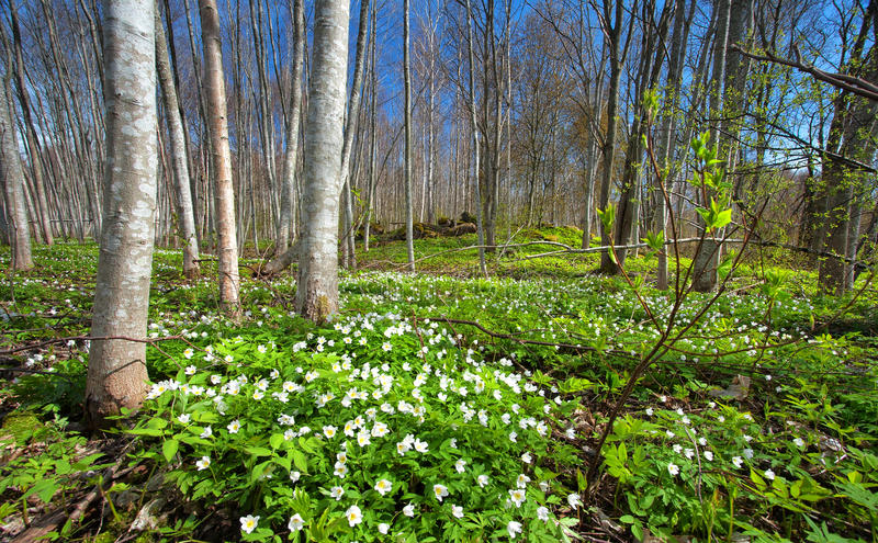 Wood with spring flowers royalty free stock photos